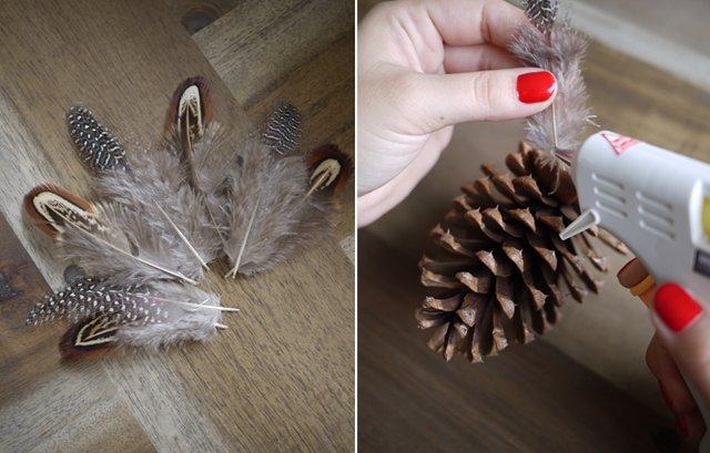pinecone6