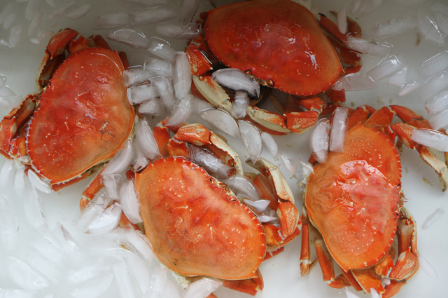 Crab ice bath
