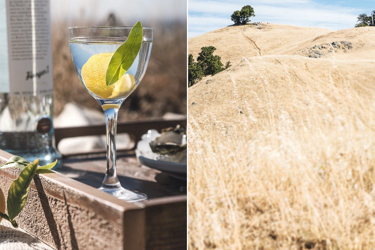 Bay Laurel Martini + Fog Point Vodka | HonestlyYUM